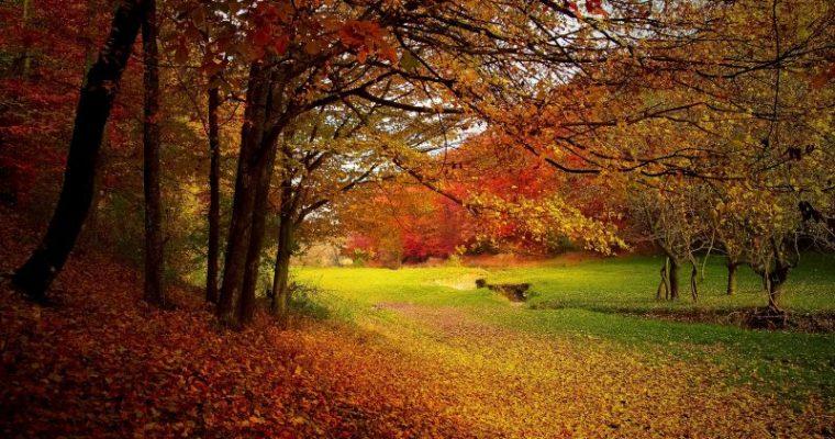 秋の旅にぴったりな音楽
