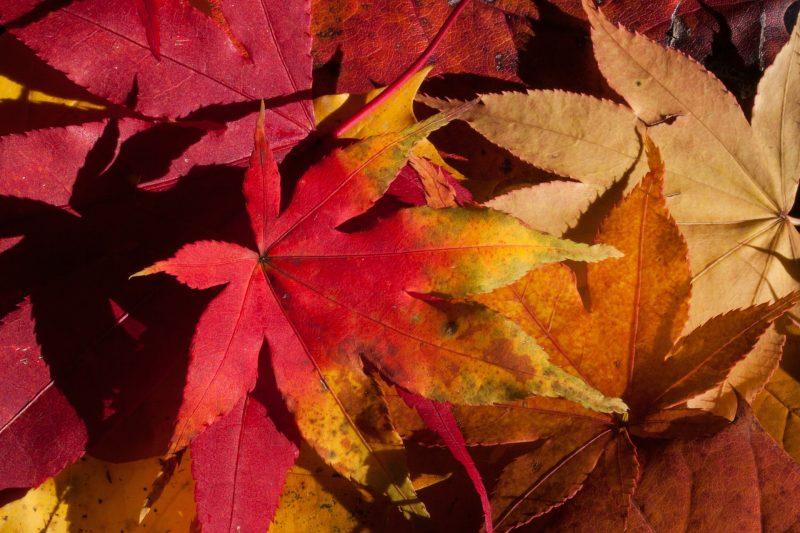 秋の綺麗な紅葉を楽しめるオススメスポット10選【国内編】