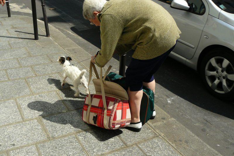 ペットを連れてでかけるときのキャリーバッグの選びかた