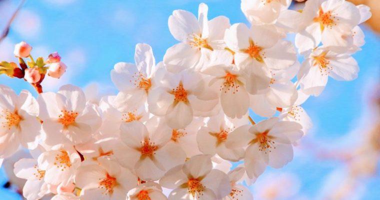 お花見に最適なグッズやリュック・バッグなどをご紹介