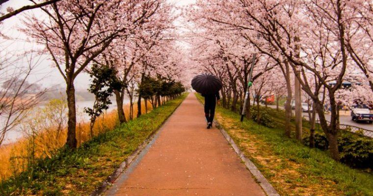【2018年】都内でオススメのお花見スポットを紹介!
