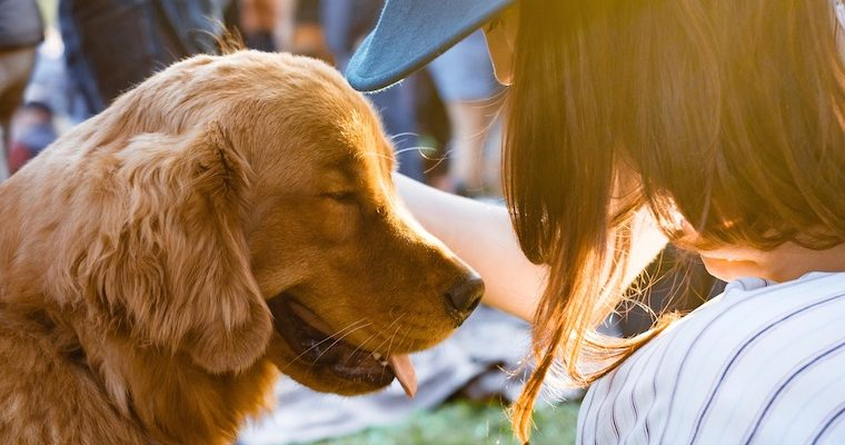 犬の熱中症は命に関わる!絶対に買うべき熱中症対策グッズ!